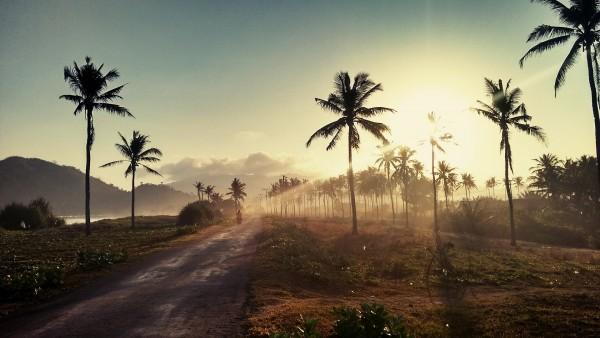 palm-trees-1081670_1920
