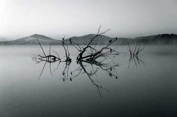 nature-reserve-375609_1920