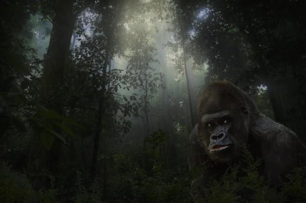 gorilla-684097_1920