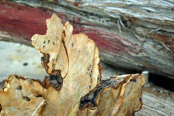 wood-3758727_1920